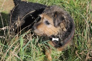 One of our foster dogs getting lost in the long grass